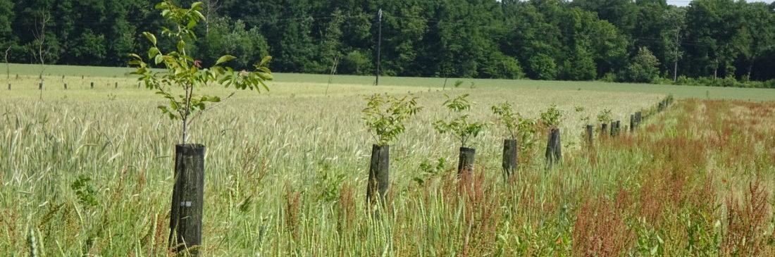 Agroforesterie à la ferme